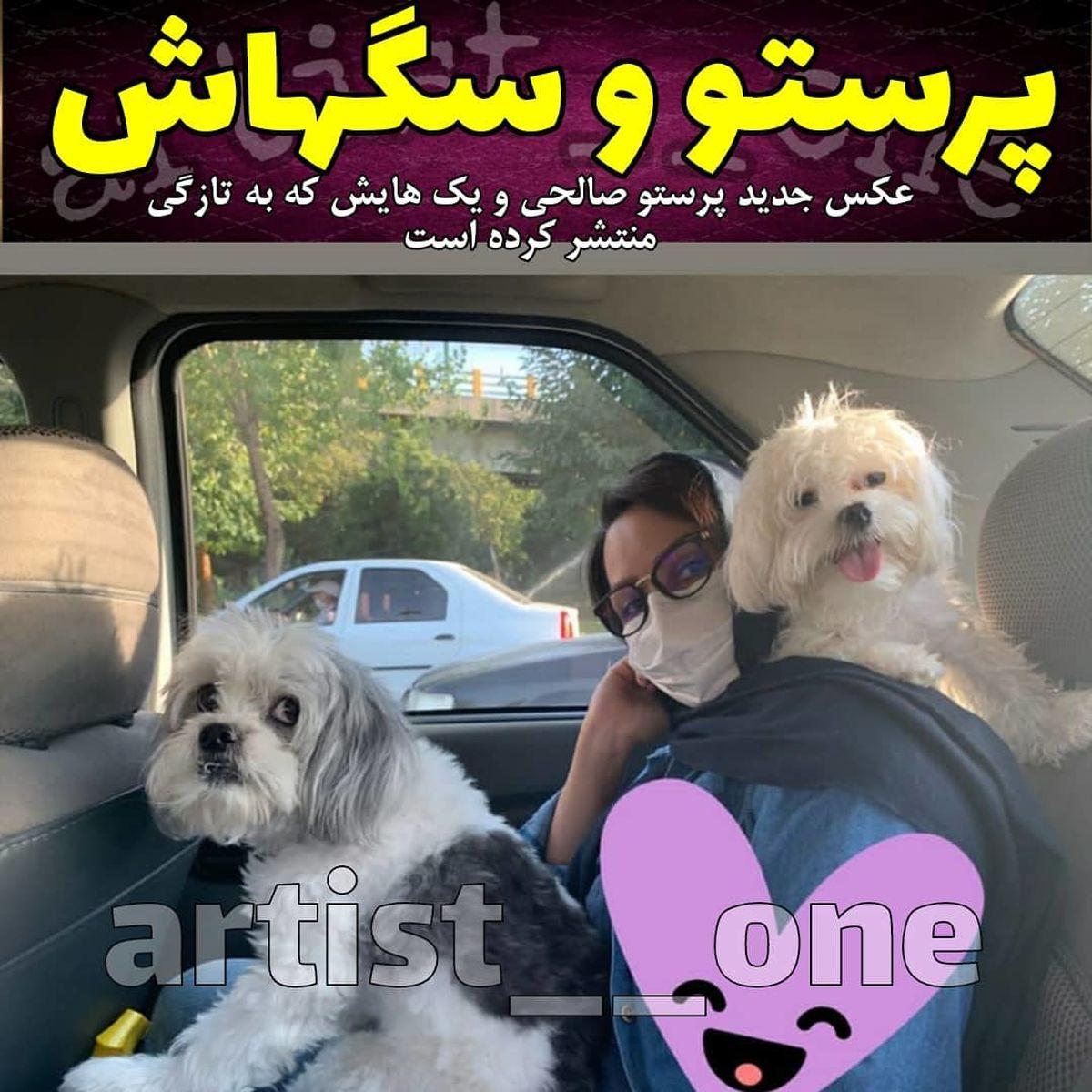 پرستو صالحی و سگ هایش در ماشین + عکس