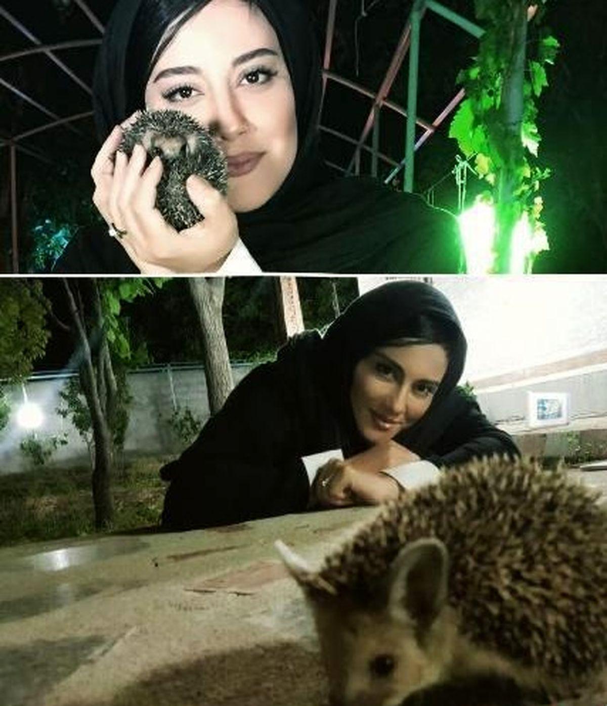 حیوان خانگی غیر عادی و وحشی آشا محرابی+عکس